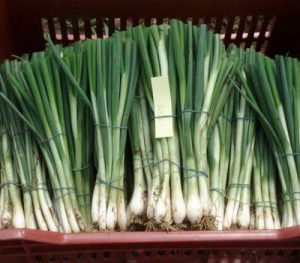 Green-Onions-400Qual