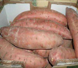 Sweet-Potato-400Qual