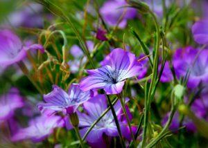 מחקר-פרחים